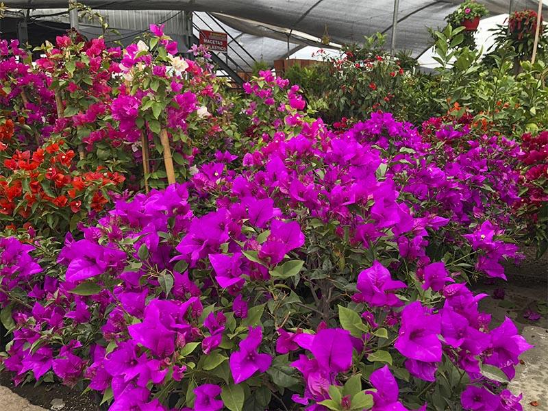 Cuidados para Plantas de Exterior
